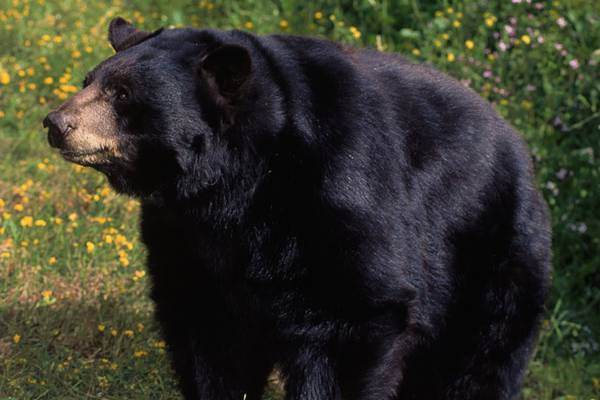Minor league pitcher bitten in back by bear while hunting in Wisconsin